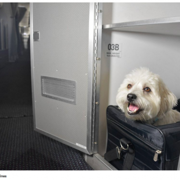 Pets get their own cabins