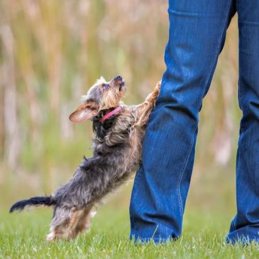 How to stop dog from jumping …