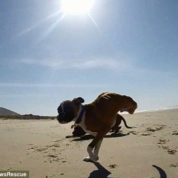 Duncan , 2 legs dog