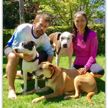 Running – Pet Sitting Without Borders