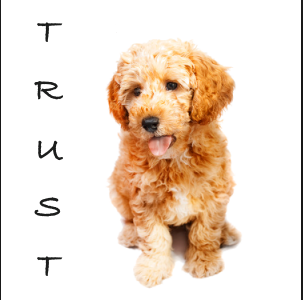House – Pet Sitting and Trust