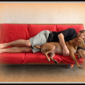 Should your dog sleep with you in bed every night ?