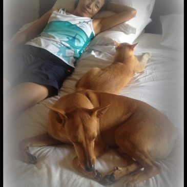Home – Pet Sitting Experiences