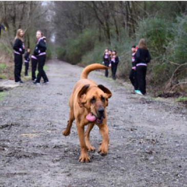 Dog Accidentally Enters Half Marathon