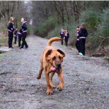 Dog Accidentally Enters Half Marathon