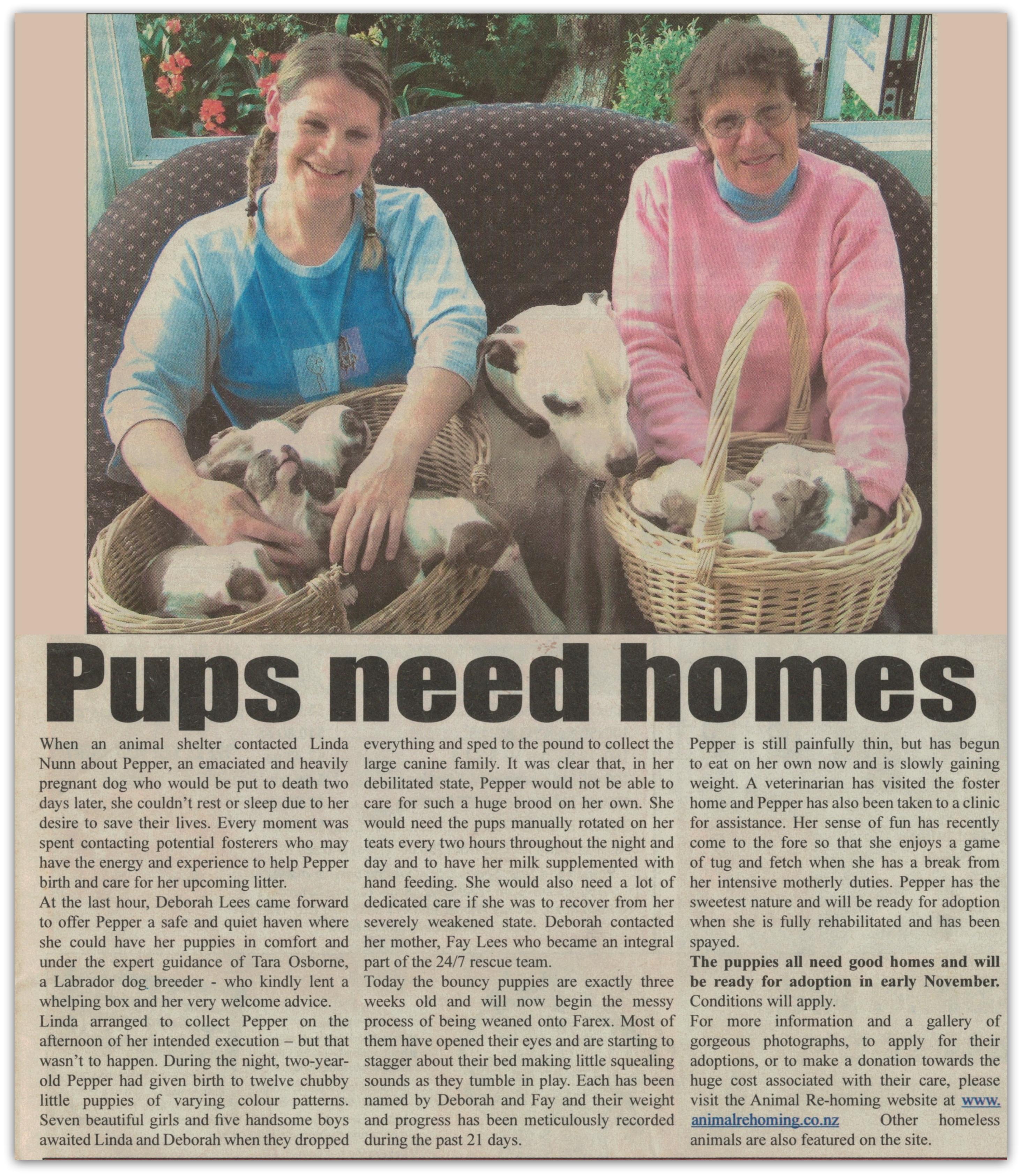 pups-need-homes